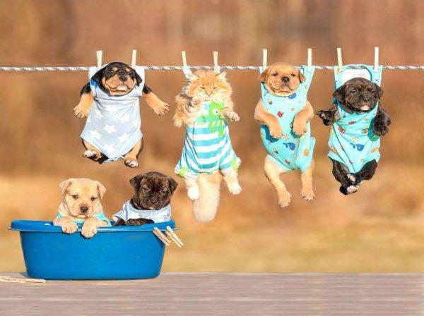 Детски килим Кученца 120-160 см от фирма Мертекс-София