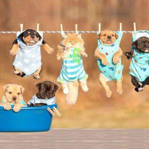 Мокетен килим Кученца 120-160 см от фирма Мертекс-София