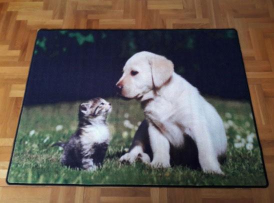 Мокетен килим Куче и коте-чудесно допълнение към интериора на дома